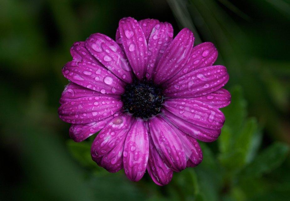 Flower flower, in the rain...