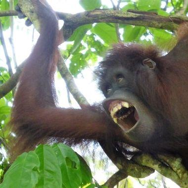 Me Tarzan.
