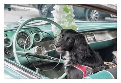 Follow me, easy driver