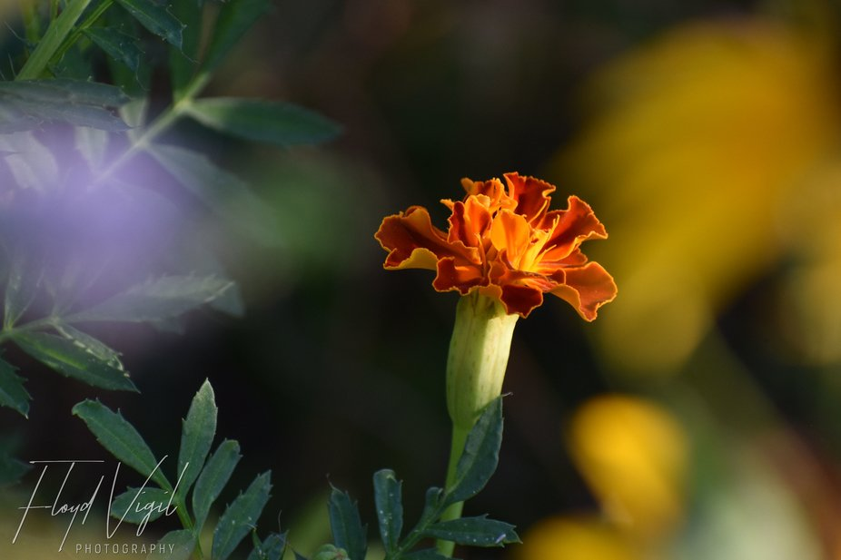 Late July Garden Bloom