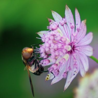 Lots of Busy Bees at Sizergh Estate in the Southern Lake District