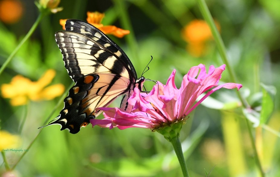 Took these at my friends property, they have planted wildflowers, so it's a haven for bu...