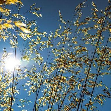Sparkling grasses.