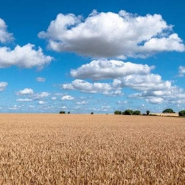 Land and sky.