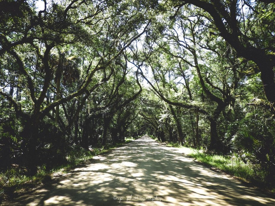 The entrance to Botany Bay Plantation Heritage Preserve, Edisto Island, South Carolina July 2019