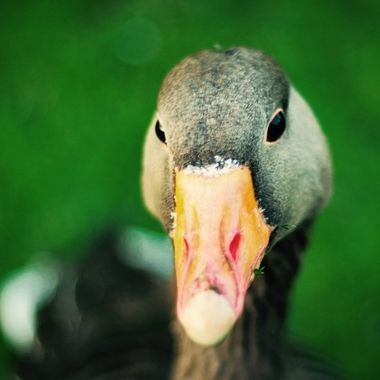 Duck. Oh duck :-)