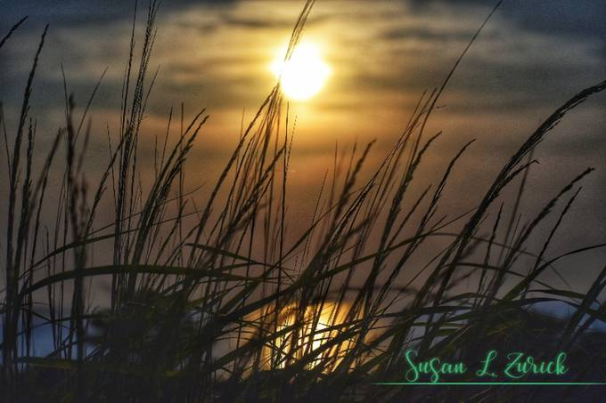 Sunset through the seagrass