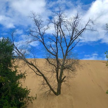 Although you can no longer climb the actual Mount Baldy Dune pictured here - there are several trails that are really enjoyable and the view is incredible.