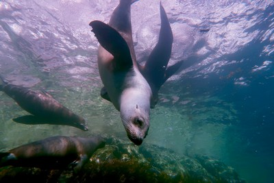 Diving in the Sea of Cortez