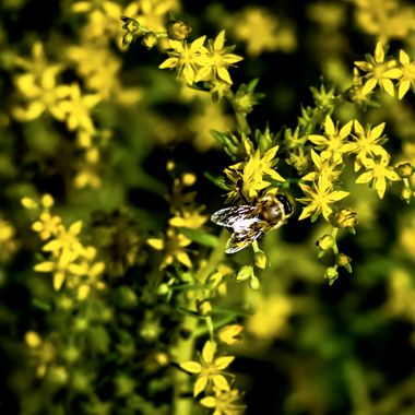 Bee Still NW