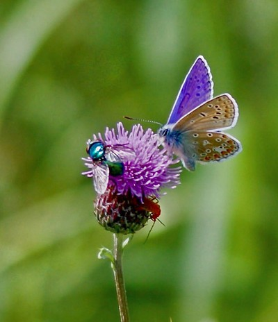Three Colourful Insects