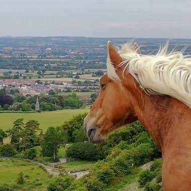 Horse contemplating.