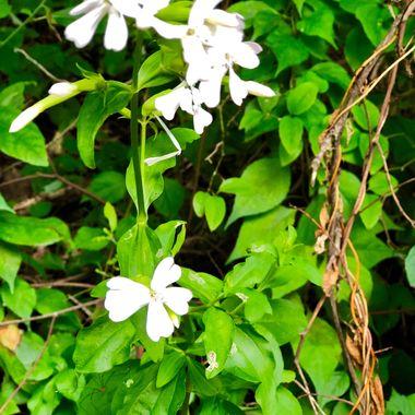 Flowers at Mount Baldy - Indiana Dunes National Lakeshore