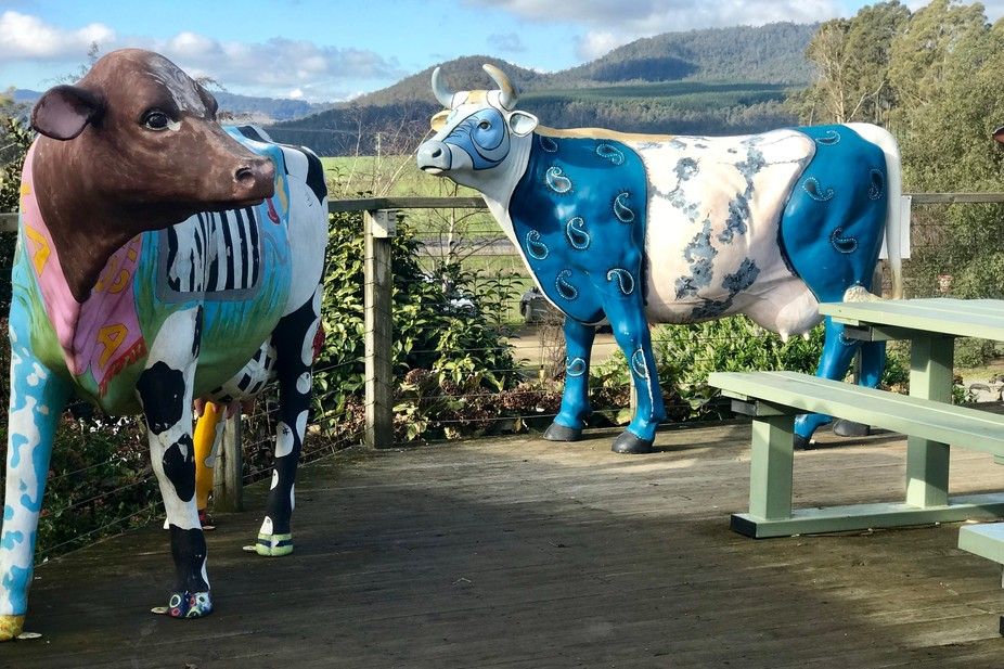 Painted cows.