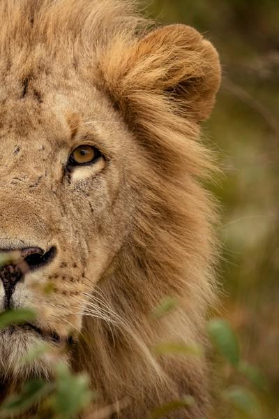 King of Mara North