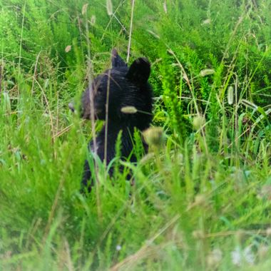 ! of 3 cubs foraging.
