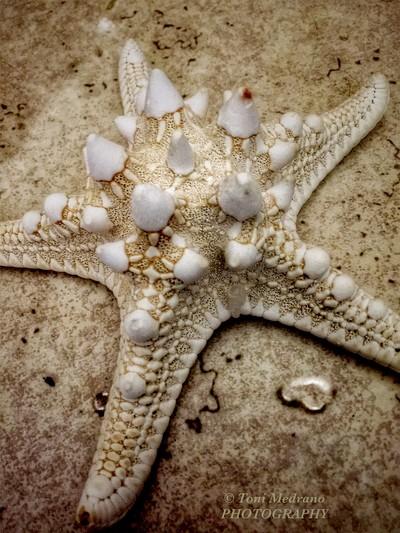 ~one starfish~