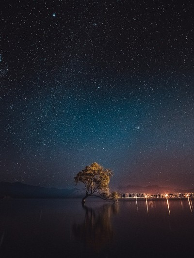 That stellar Wanaka tree