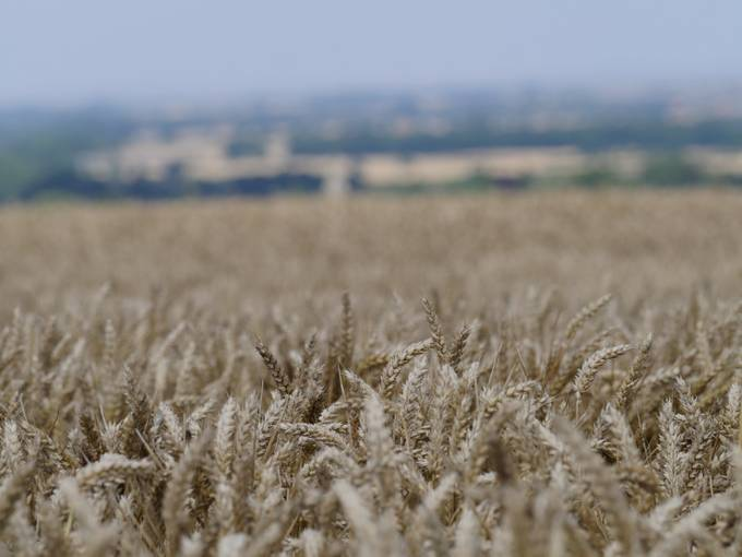 The Lincolnshire Wolds near harvest time.