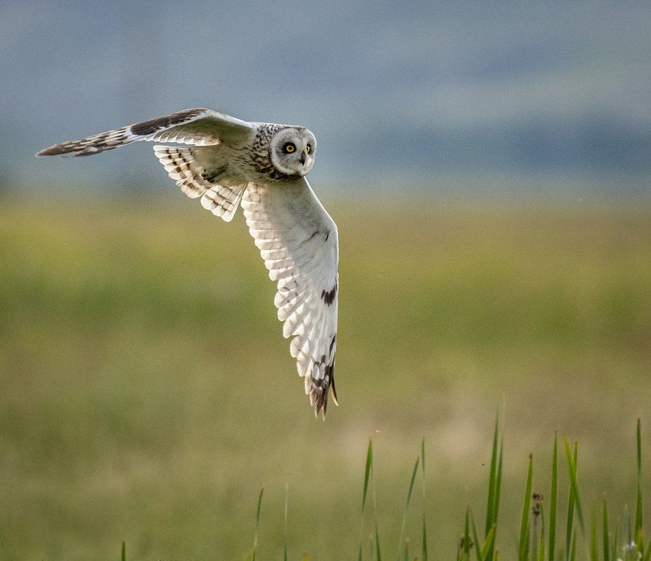 While out looking, we found an owl family.  The male, female and two juvenile owlets seemed to no...