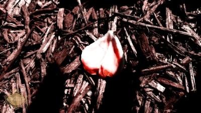 'Til the last petal falls...