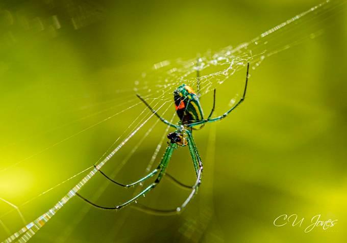 Cypress  Gardens- August 2019 Spider