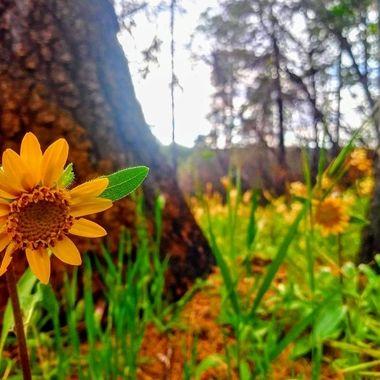 Post fire wildflowers