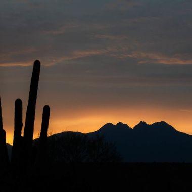 Four Peaks and Saguaro