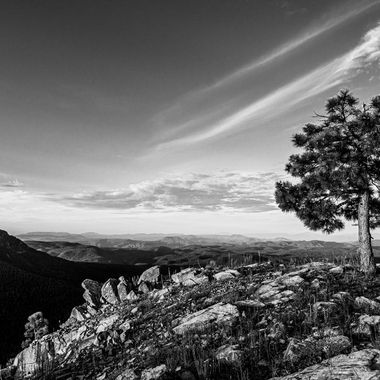 Single tree overlooking Mogollon Rim, AZ.