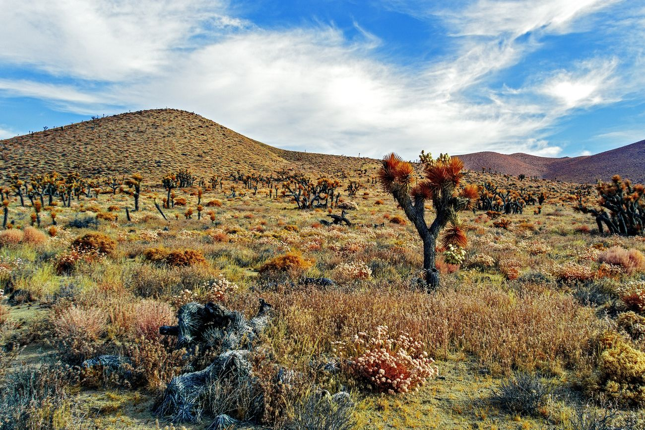 Colorful Mojave Desert in IR Chrome with blue sky.