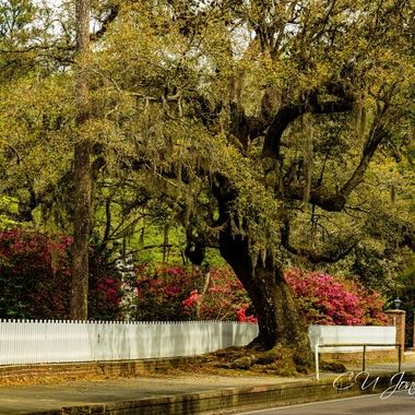 Walk about in Historic Summerville