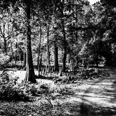 Cypress Gardens-April 2019