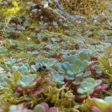 Wild Succulents
