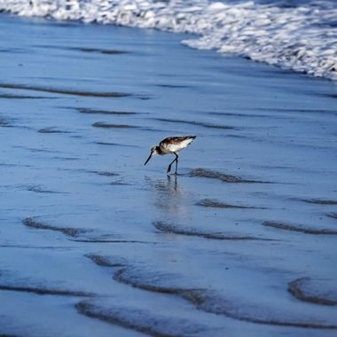 Willy Willet Searching for Lunch NW