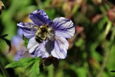 "Photography ""Bee"" fun!"
