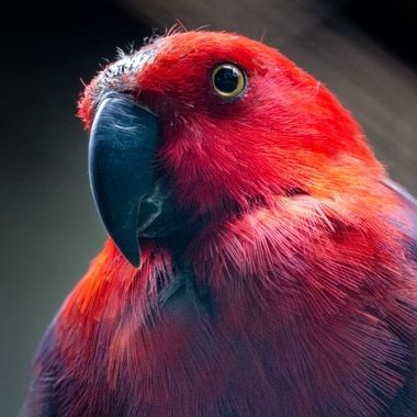 beautiful parrots day at the zoo, Artis
