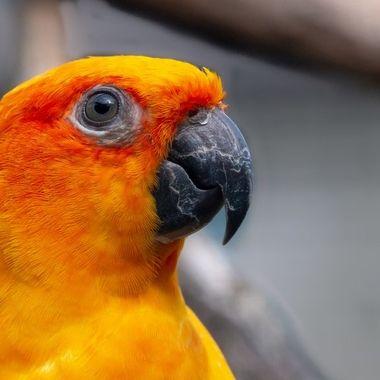 parrot, zoo, Artis