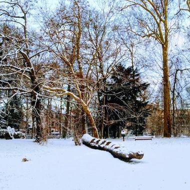 winter 2019 19