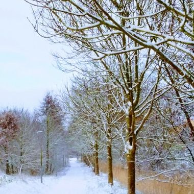 winter 2019 25
