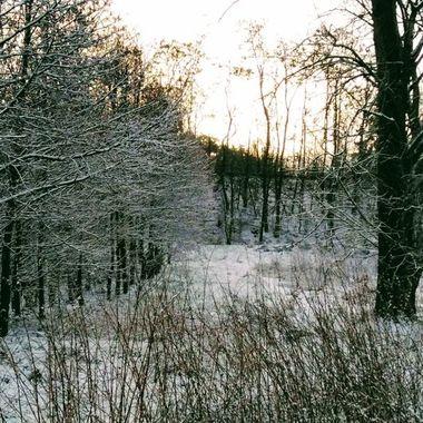 winter 2019 31