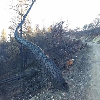 Head Dam tree after fire