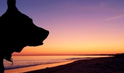 Dog @ Sunrise