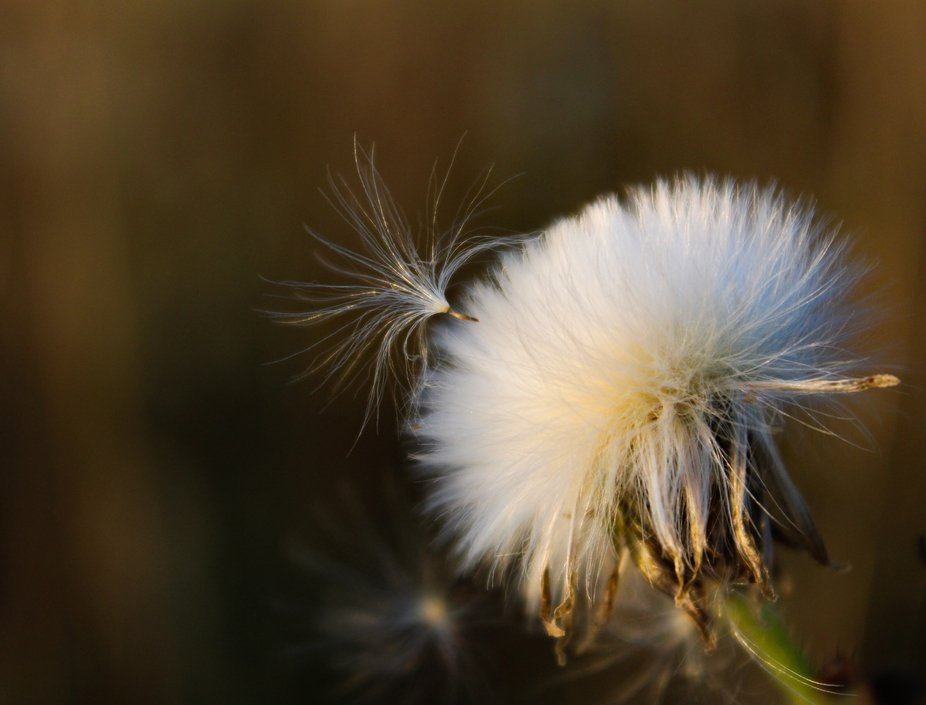 Softness in nature..