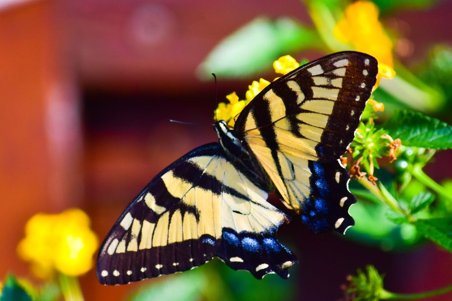 3137 butterfly