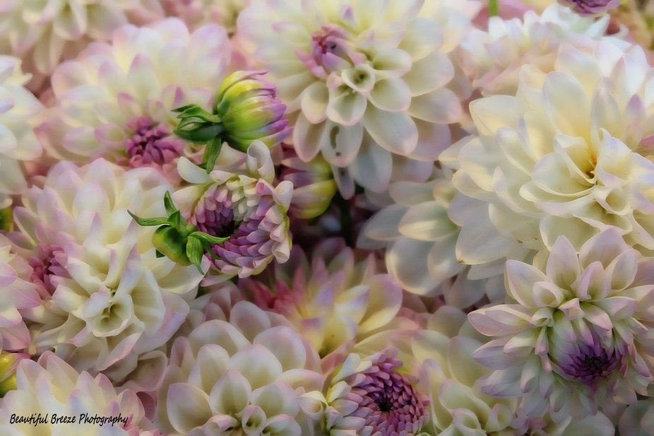 Seattles flower market