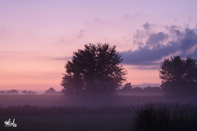 Foggy Fields at Dusk