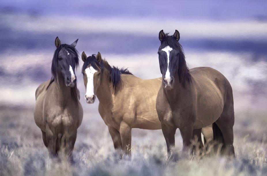 Wild horses, healthy, happy and free.