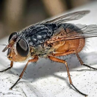Fly (4)