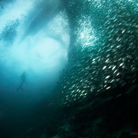 Inside a sardines school of fish in the reef, Philippines.