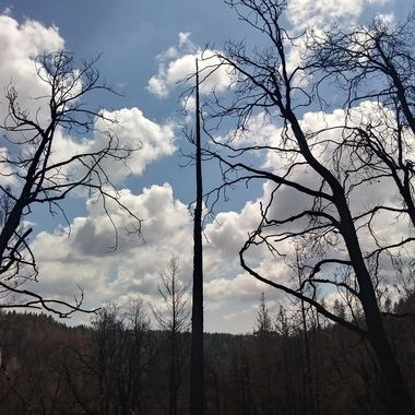 Burnt trees and clouds